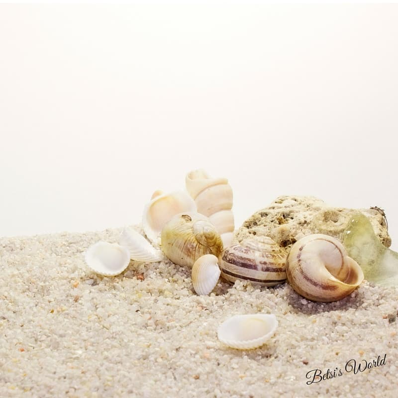 Beachcombing & Broken Shells: Finding the Extraordinary in the Ordinary www.betsiworld.com