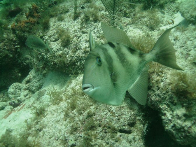 Snorkeling Dry Rocks in the Florida Keys https://betsiworld.com//out-of-my-comfor…the-florida-keys/