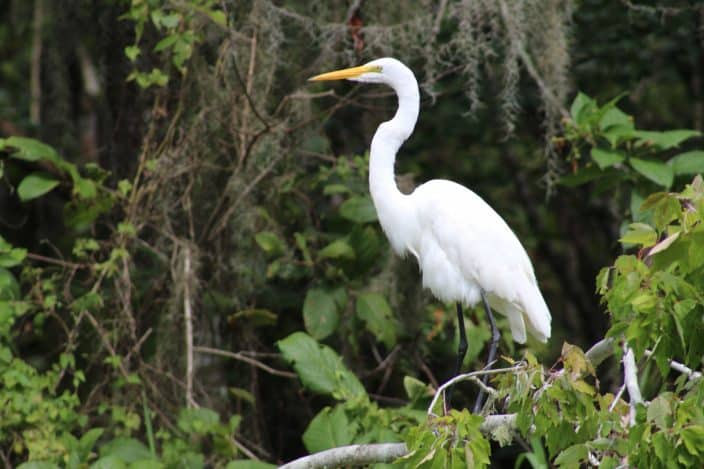 Discover the natural side of West Volusia with St. Johns Eco Tours. Escape the norm and come to West Volusia, Florida.Three Day Escape to West Volusia, Florida; betsiworld.com