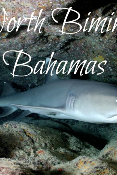 Playing With Sharks in Bimini – Oh My!