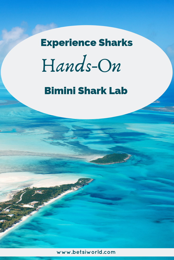 The Shark Lab in Bimini is where you can safely face your fear of sharks.