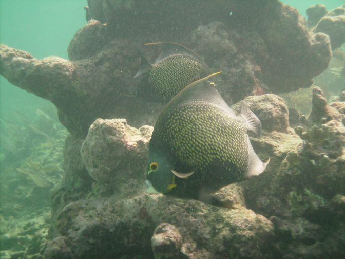 Snorkeling Dry Rocks in the Florida Keys http://www.betsiworld.com/out-of-my-comfor…the-florida-keys/ www.betsiworld.com