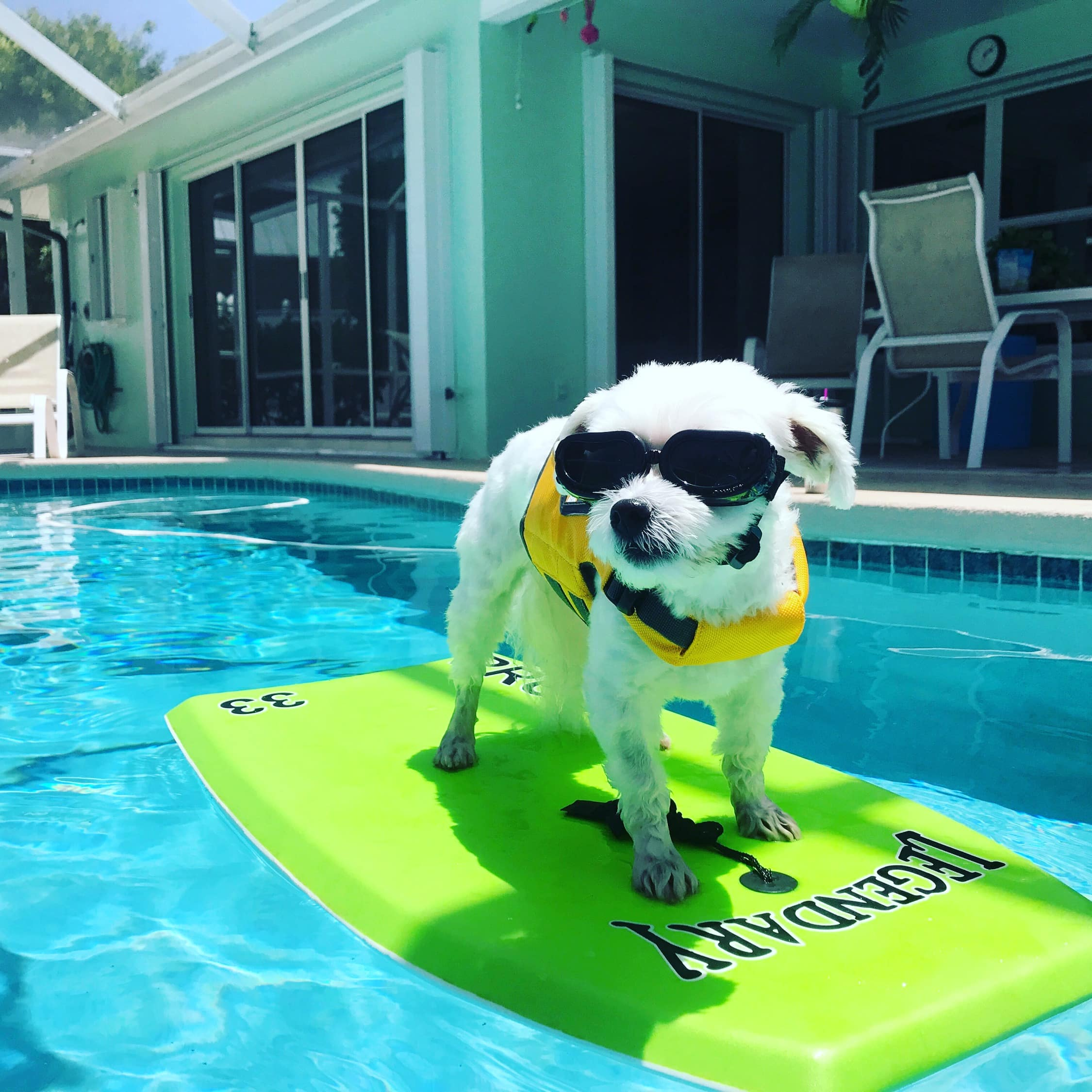 Florida Boating ~ your four-legged pet will love being on the water! Zach loves to chill out on the boogie board in the pool and in the ocean!