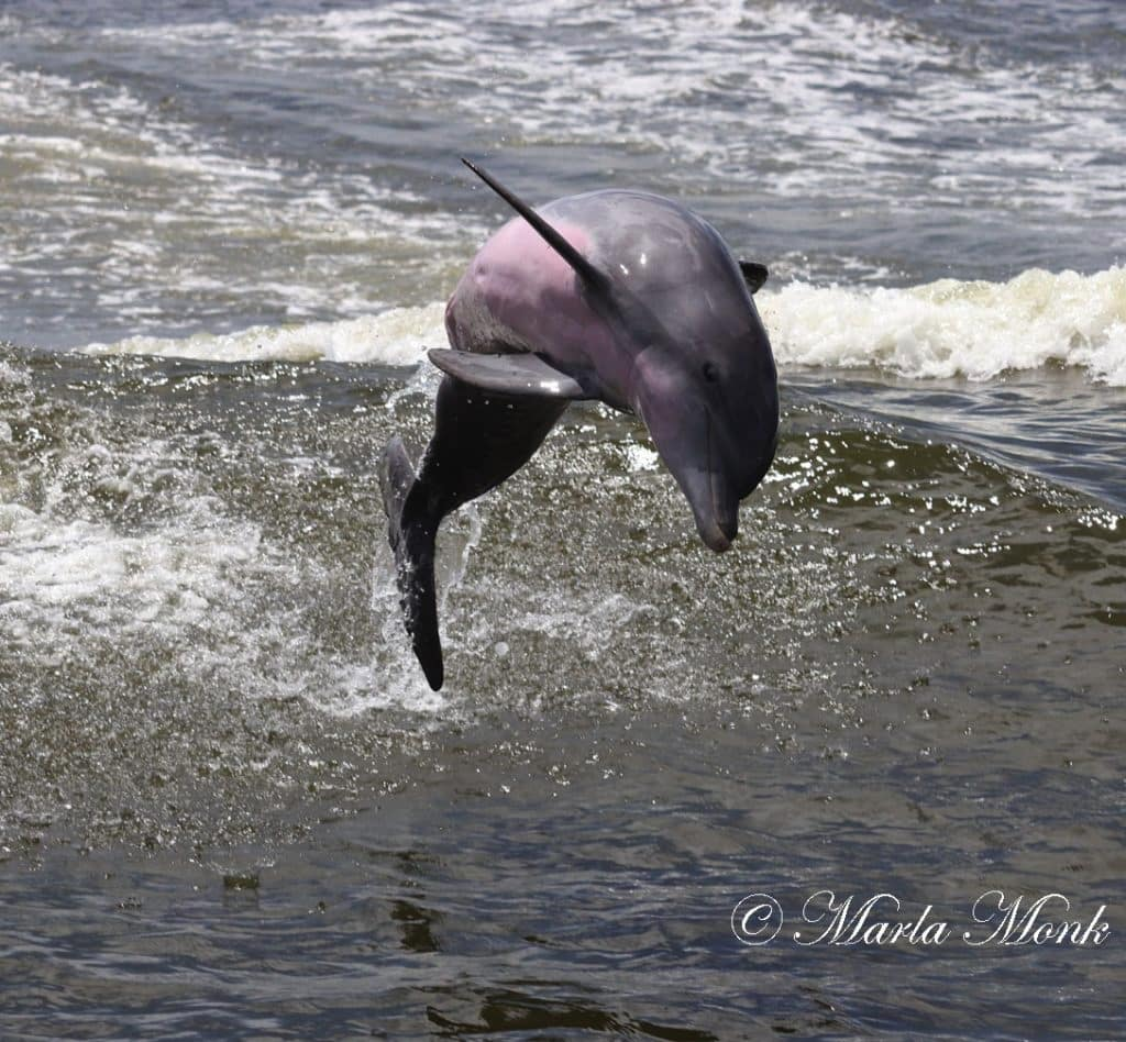 Dolphin Boat Tours in Orange Beach offers fun for the whole family!