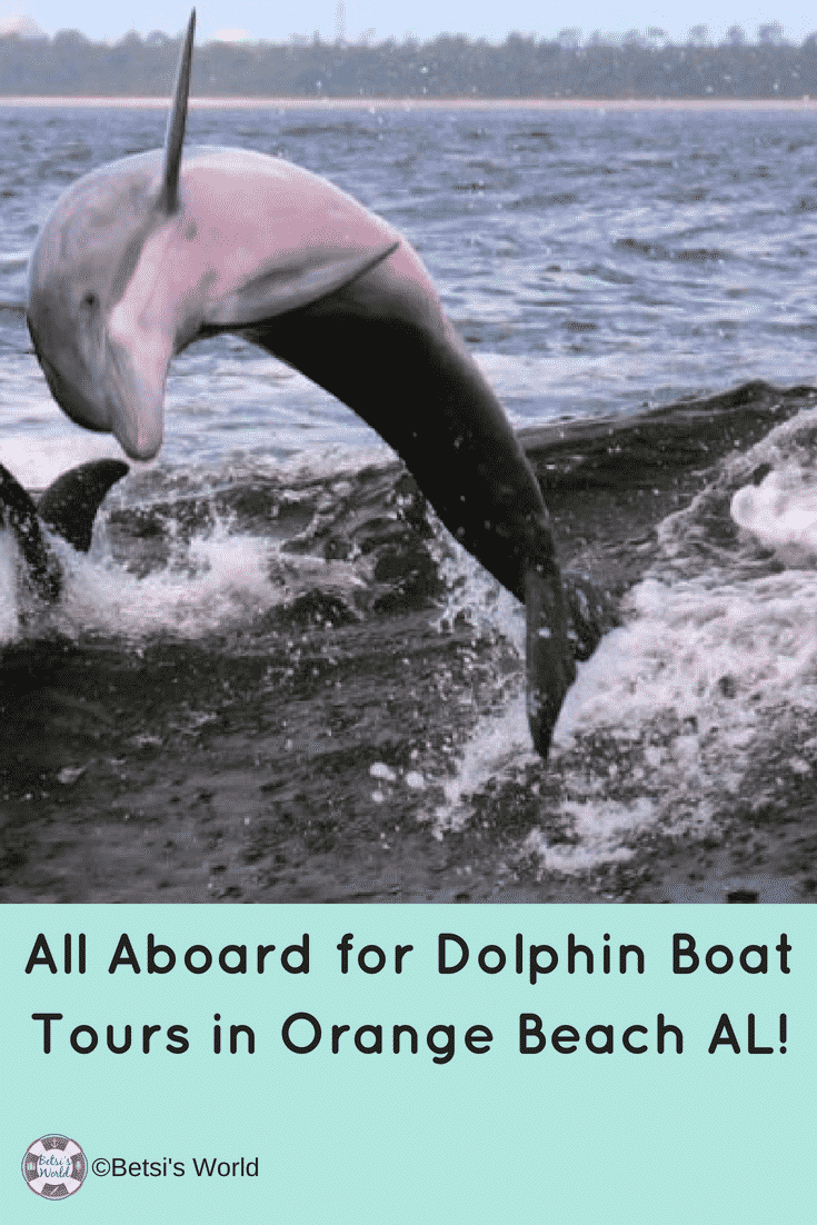 Looking for great #familyfun in Orange Beach, AL? How about a Dolphin Boat Tour?