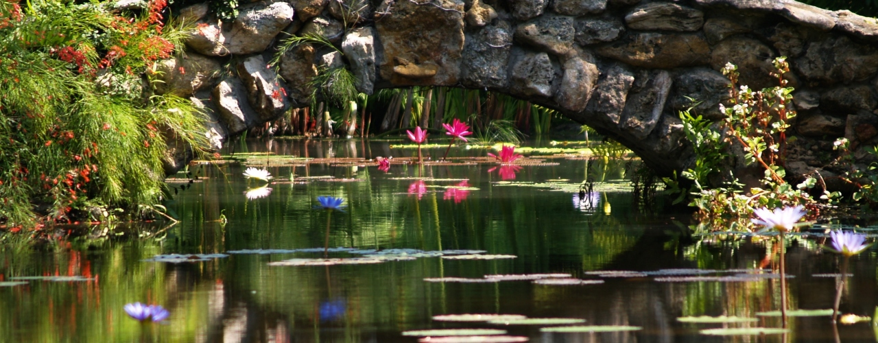 The vast water lily collection at McKee Garden in Vero Beach is one of our top 10 things to do in Vero Beach, Florida