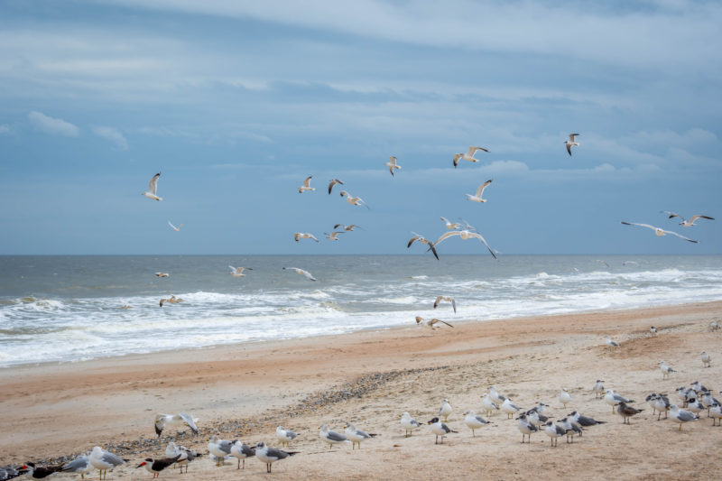 Amelia island beach with seagulls and water, a place to visit for a couples Florida weekend getaway
