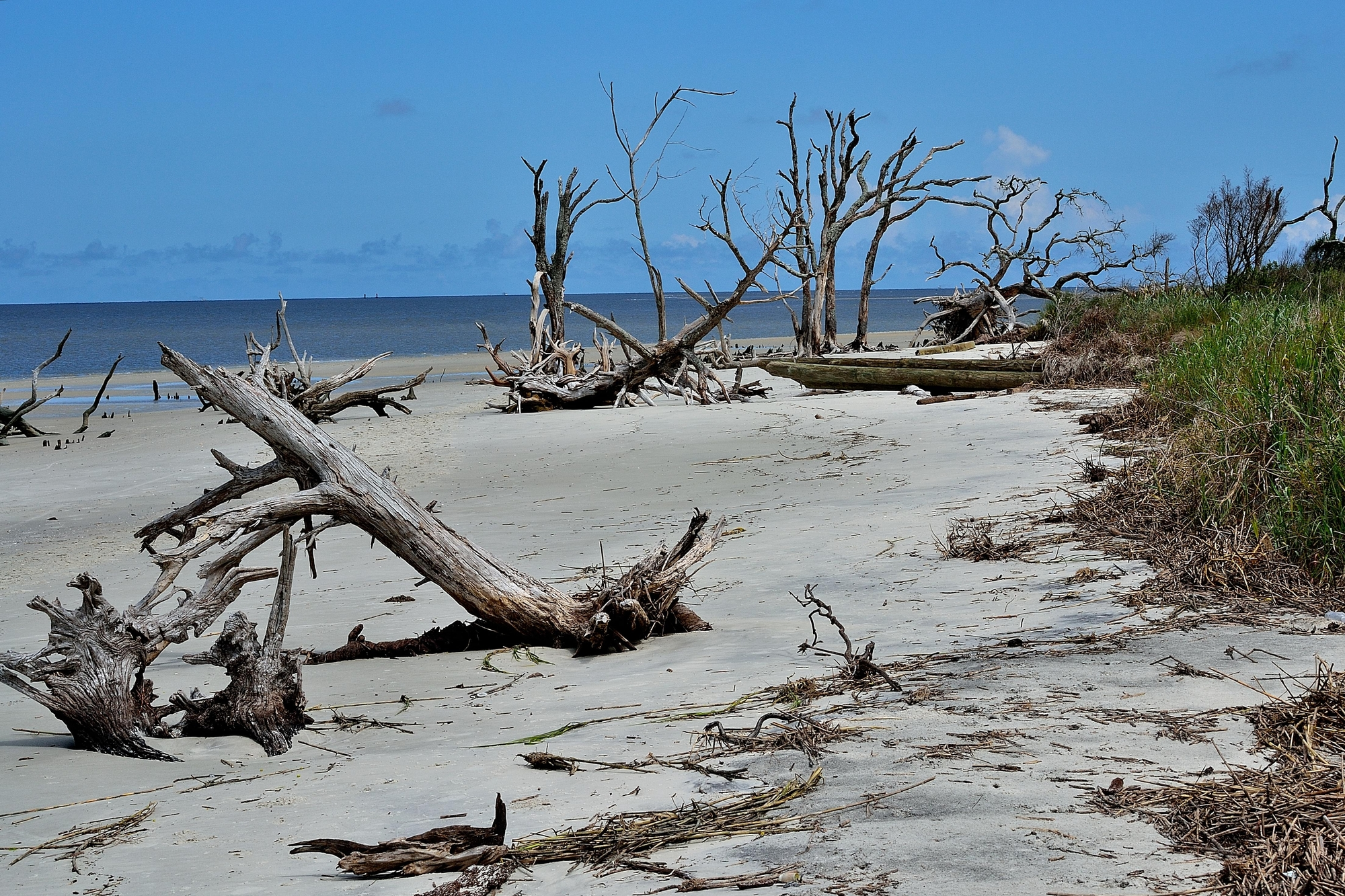 large branches of driftwood scattered across a white sand beach
