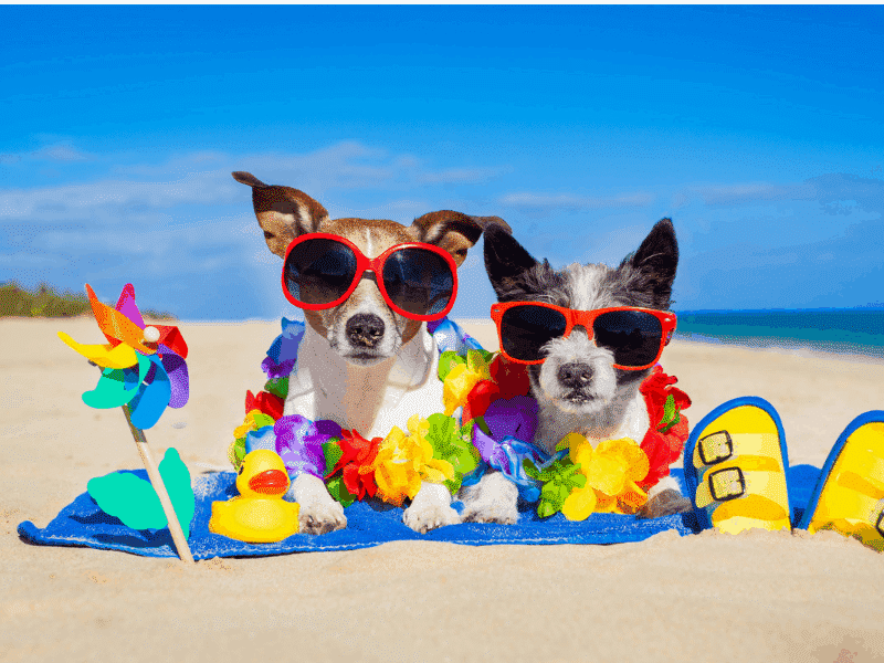 The Best Dog-Friendly Vacation Hotspots In Florida