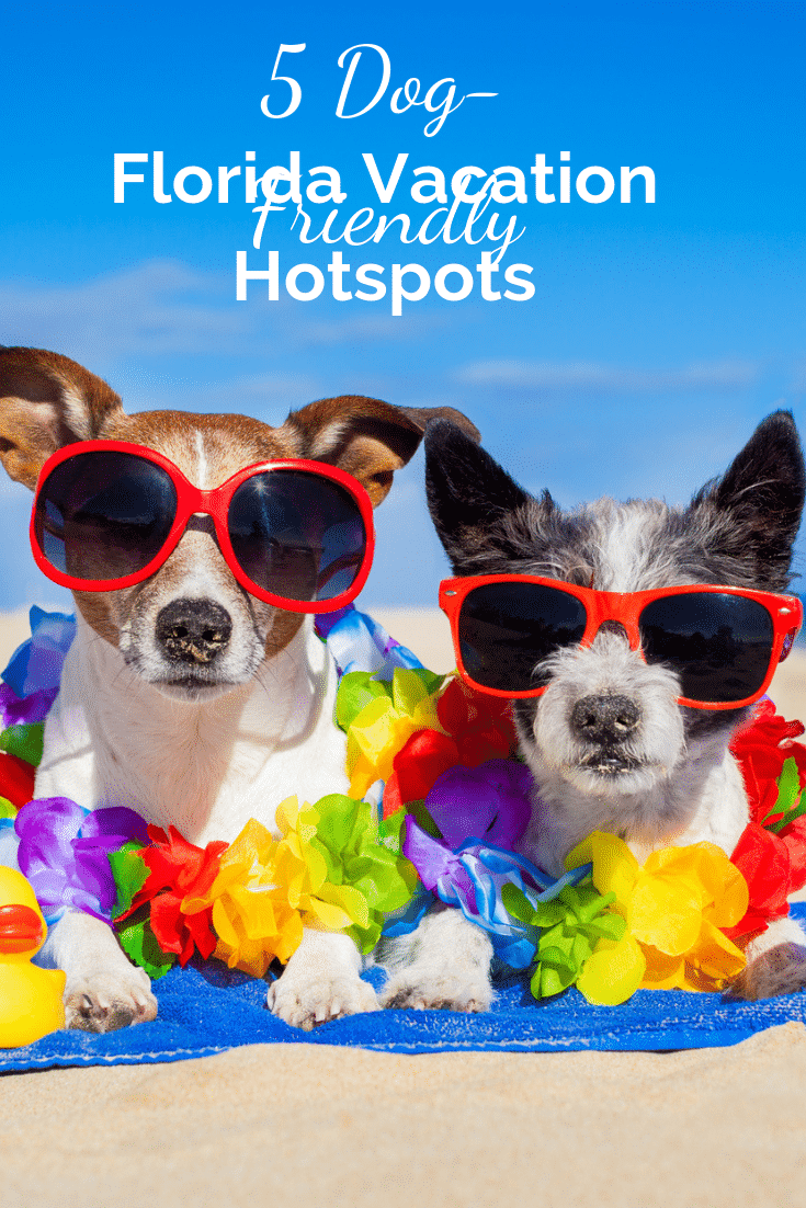 Florida loves dogs, and these 5 Florida dog-friendly vacation hotspots will put the spotlight on your pup and treat them like a VIP. #dogfriendlyvacation #dogfriendlyflorida #travelwithpets