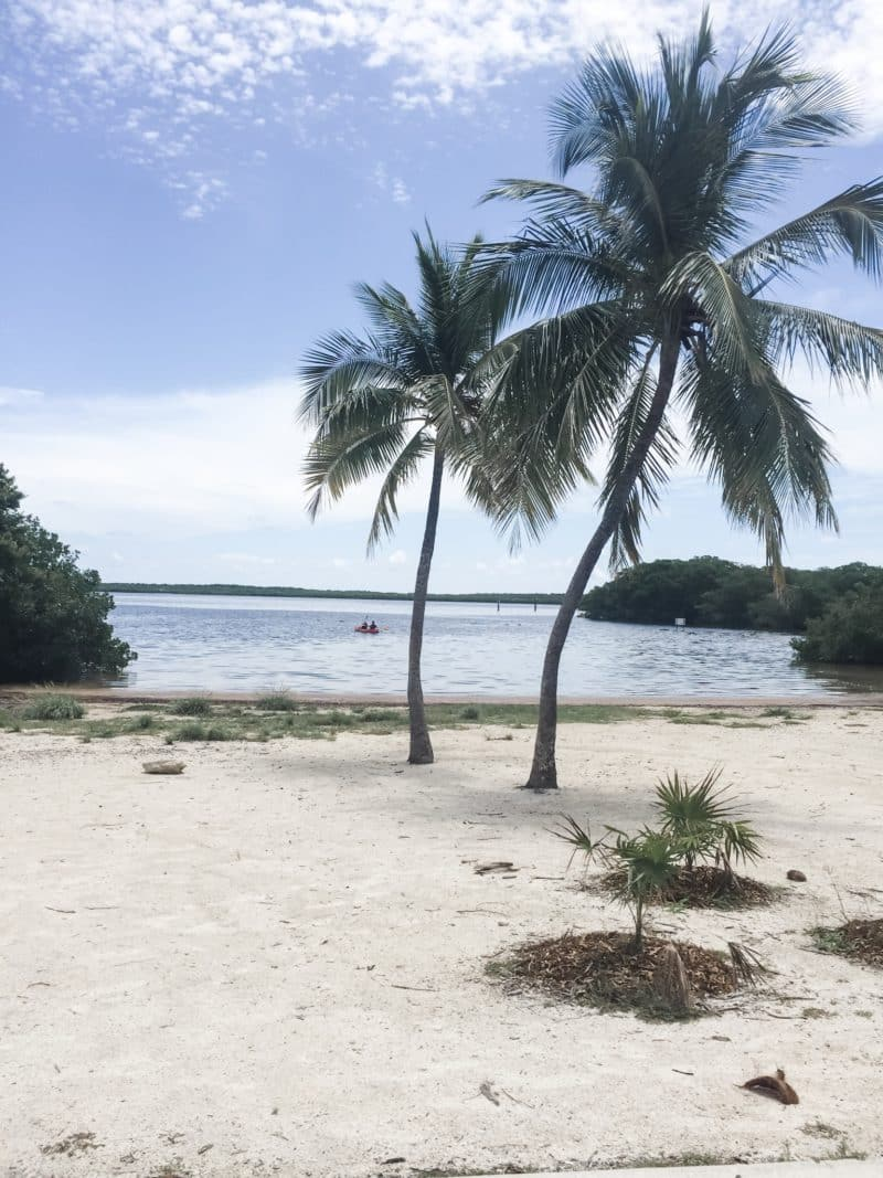 sandy beach with palm trees and tufts of grass