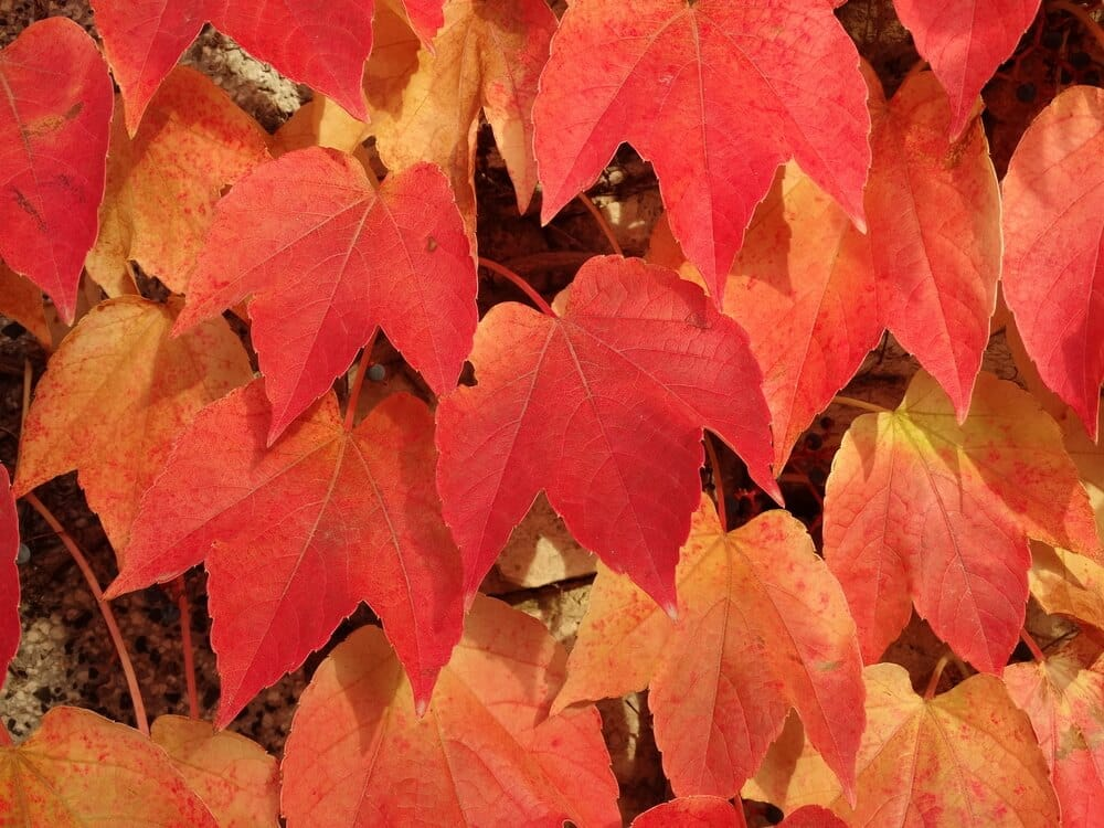 Beautiful fall foliage you can see on your romantic getaways in the south this fall