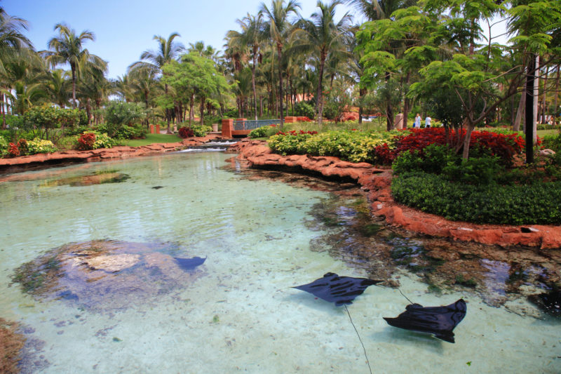 Atlantis Hotel on Paradise Island in Nassau,Bahamas, where you can spend a romantic getaway. stingrays in a lagoon