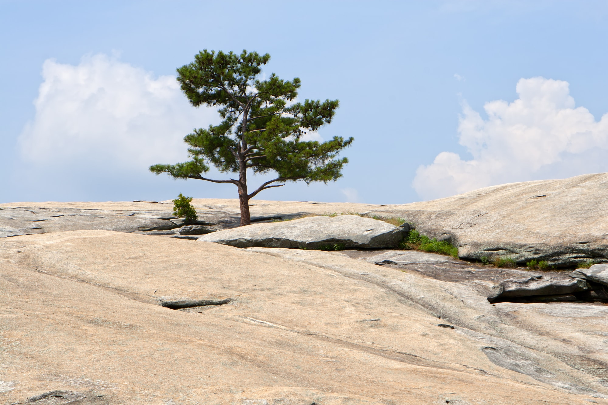 stone mountain, a cliff with a tree. A great destination for an affordable romantic getaway