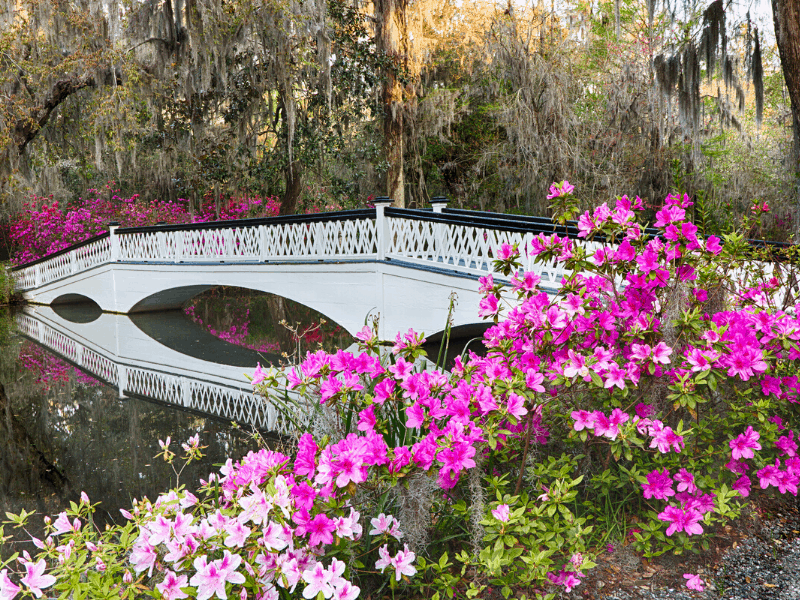 gardens with white bridge over pond filled with pink flowers