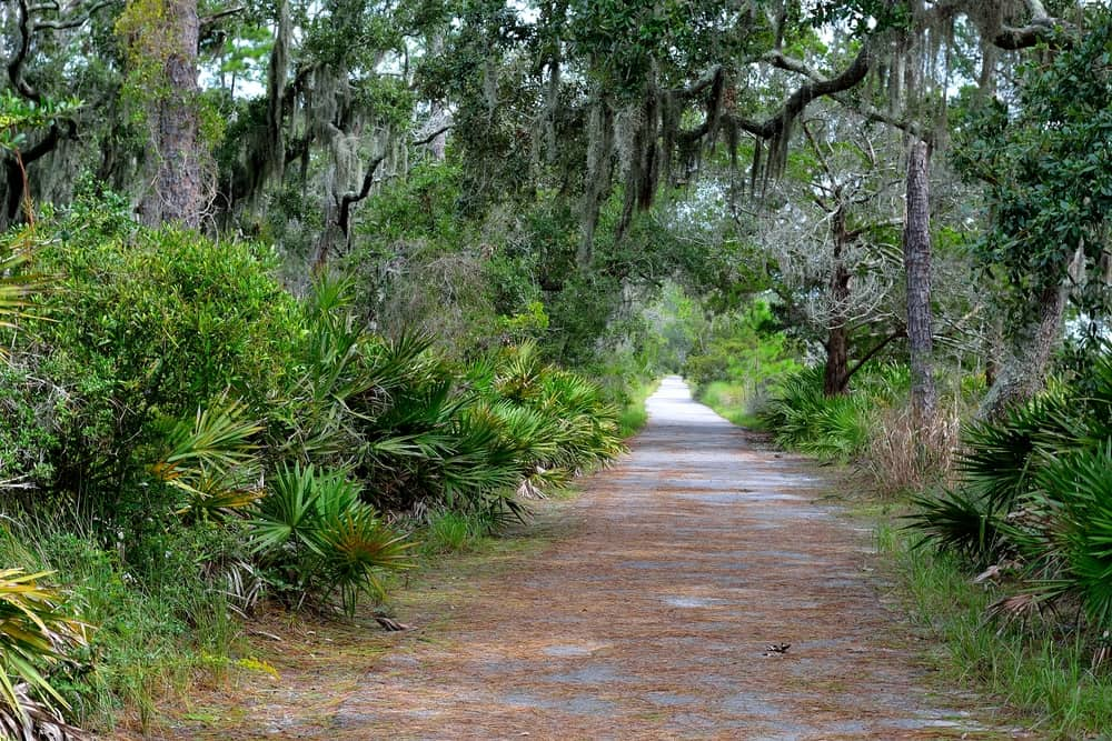 a nature trail in florida with palm trees, shrubs and moss. Ideal for a romantic vacation in the south for couples.
