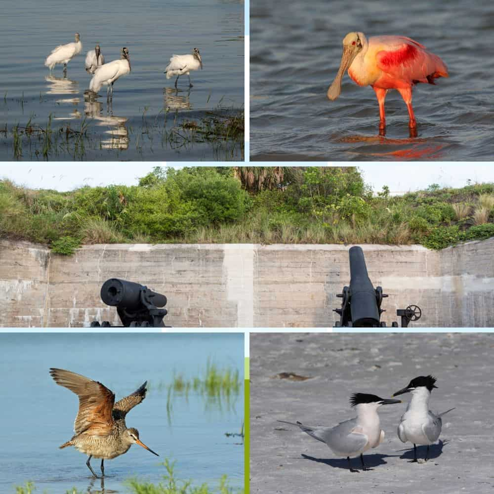 wildlife in Clearwater, Florida, different types of birds
