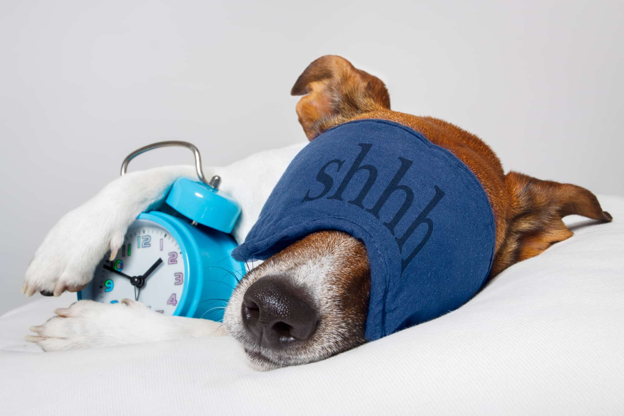 dog with eye mask and an alarm clock asleep on a bed