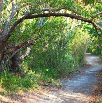 Wondering where to find good hiking trails in Florida? We've got you covered! For the best hiking in Florida experience, we've rounded up our top 5 favorite parks from around the state.