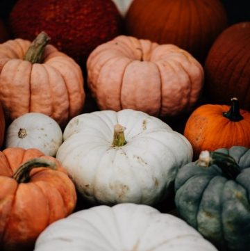 multi-colored pumpkins