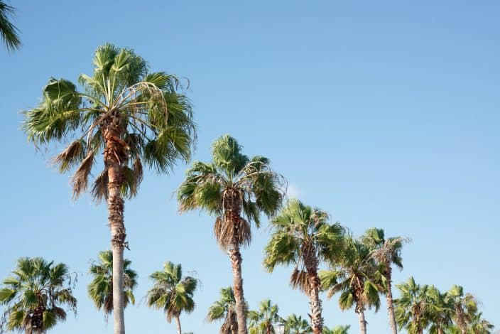 blue skies with palm trees in Florida