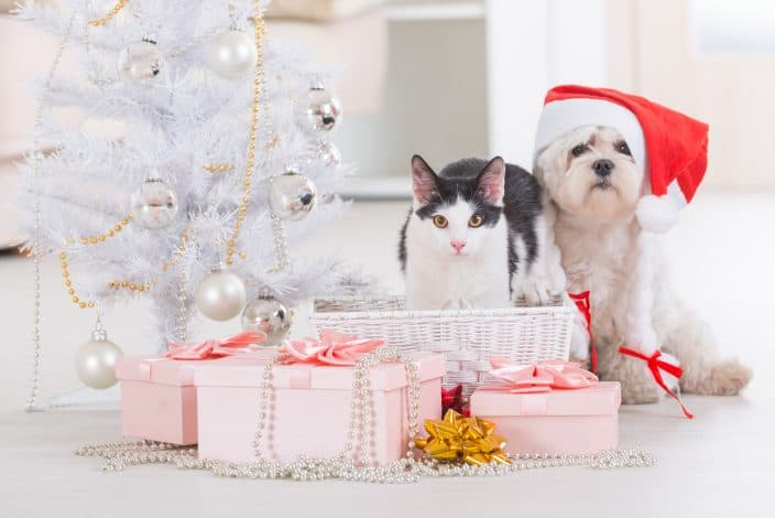 dog and cat sitting with gifts, to represent gifts for pet owners this holiday season