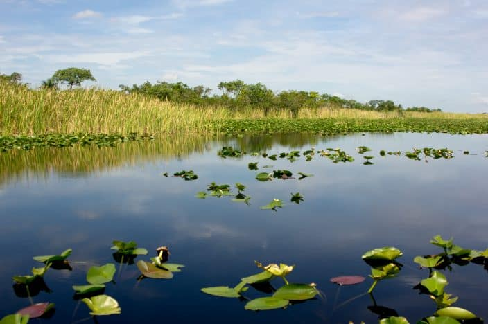 wetlands in Florida, a beautiful place to visit during your romantic getaway