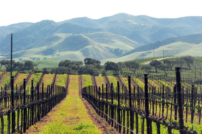 vineyard with rolling hills in the background