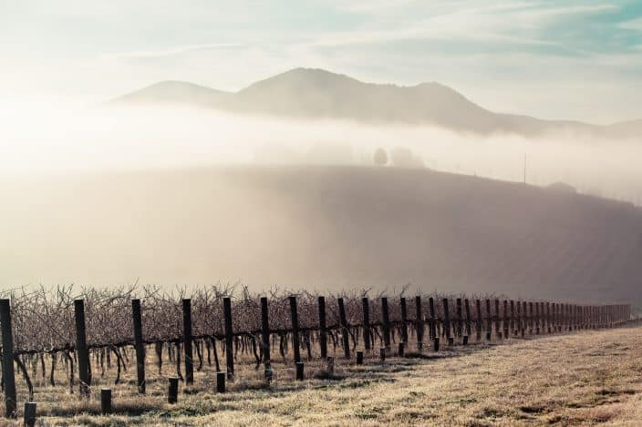 winter vineyard with fog and sunrise
