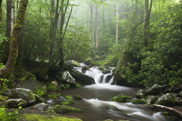 Relaxing scenic along the Roaring Fork Moter Tour in the Great Smoky Mountains National Park, a destination for a romantic getaway in Tennessee