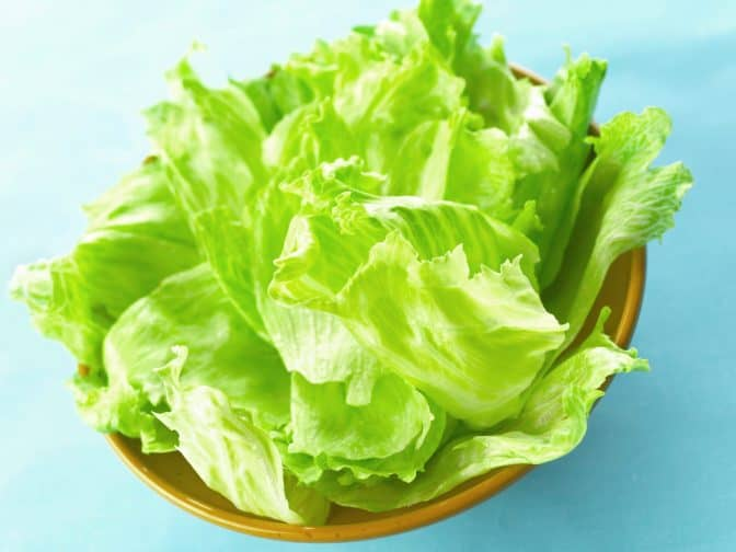 lettuce in a bowl on a blue background to use in a BLT sandwich