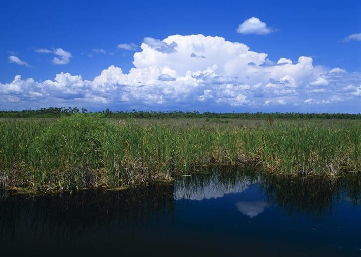Big Cypress National preserve with a grassy swamp and bright blue sky with clouds, a great day trip from Fort Lauderdale