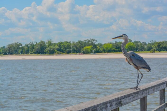View of a bird sitting on a wooden ledge on a dock with the ocean, shore and trees in the background.