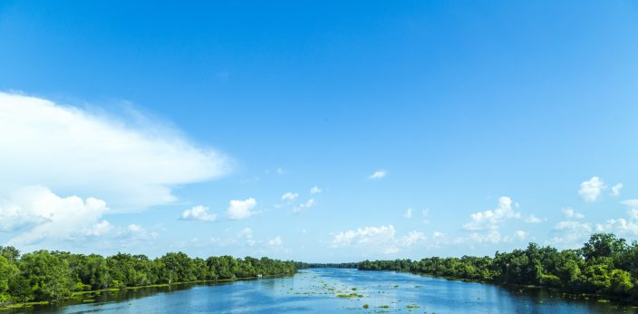 a view of the Mississippi river with bright blue skies and clouds with green trees on either side of the river with lilypads floating in it