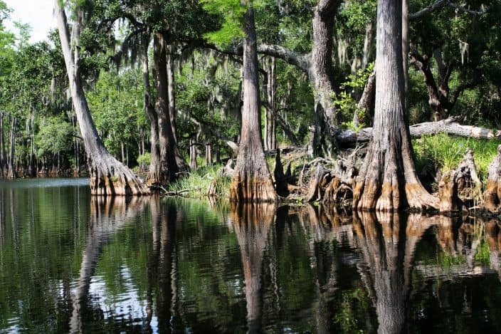 A serene shot of a swamp in the everglades national park Florida, a day trip from Fort Lauderdale