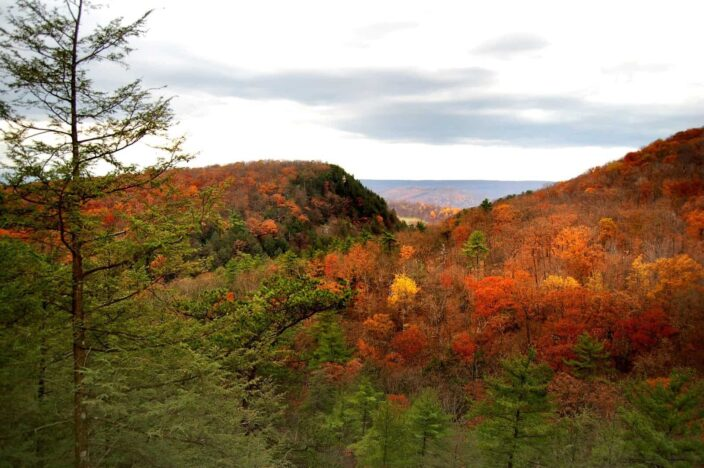 Picture of autumn hills in west Virginia with golden brown leaves, hills and trees all in one frame during daytime.