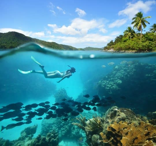 women deep diving in the sea with palm trees, blue water, fishes, and coral reefs all in one frame.