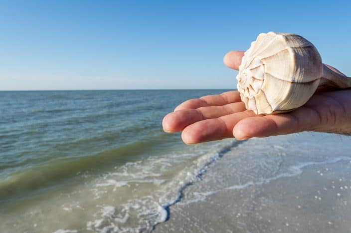 picture of a hand holding a shell with waves and the sea in the background.