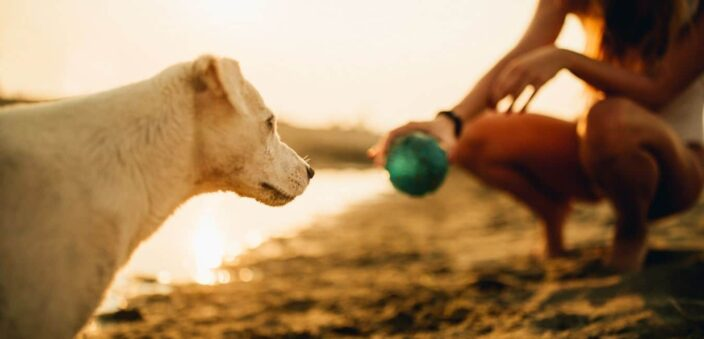 Yellow fur baby playing with green ball and owner on the beach by the shore. The prefect game and toy to add to your Packing List for Beach Vacation