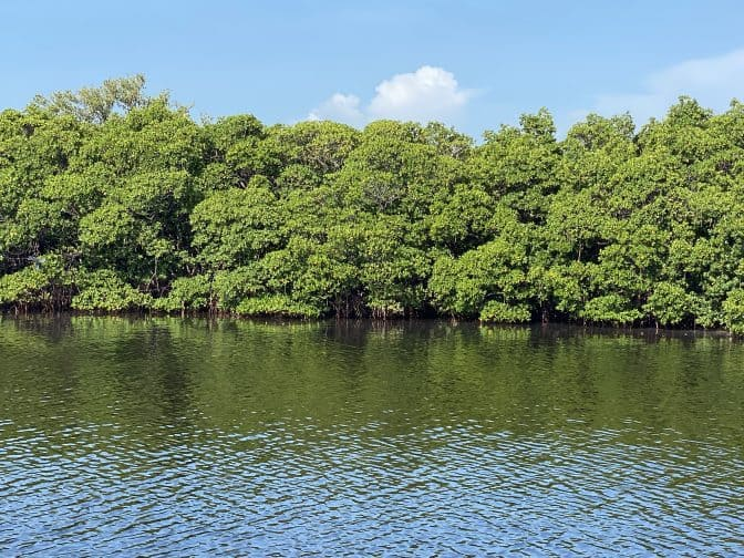 Caladesi Island State Park with green mangroves, and water with blue skies, an example of what things to do in Clearwater Beach