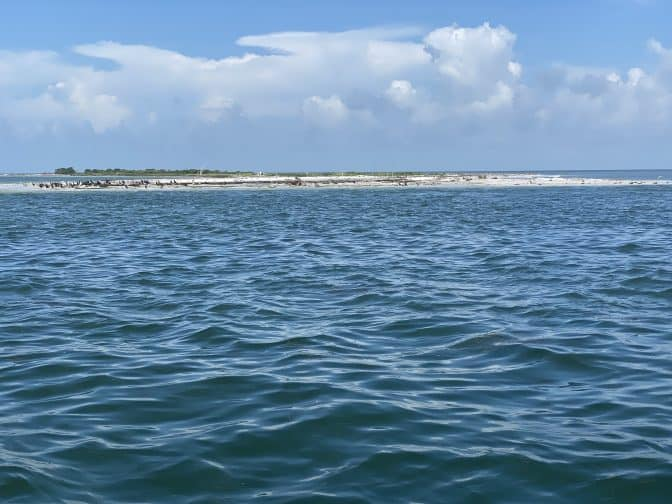 a view of Caladesi island in the distance with small birds, blue waters, and blue skies