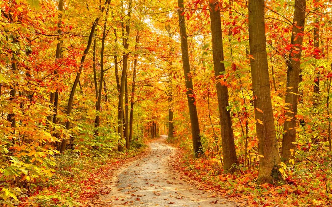 10 Things To Do In Fall
