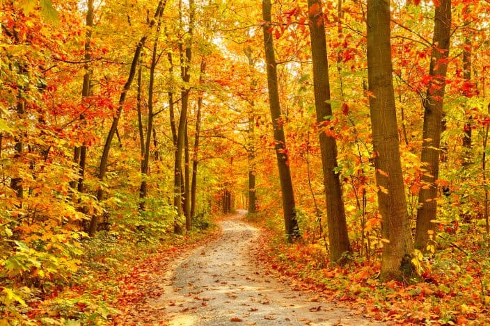 a pathway through a forest in the fall with orange, yellow, and red foliage on the trees and on the pathway