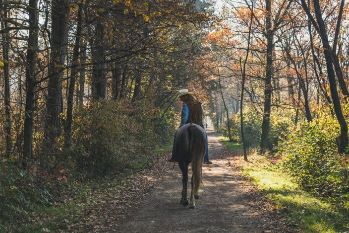 a woman riding a horse with a cowboy hat on, a blue shirt and blue jeans through a forest with fall foliage on the trees, an example of things to do in fall