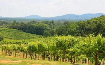 5 Wineries In North Georgia To Visit This Fall